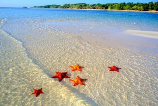 Starfish in the sea at a tropical beach.