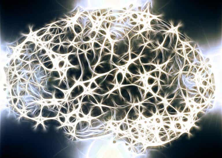 Do you know why the White Matter in our Nervous System is so Important?