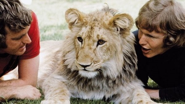 The Heartwarming Story of Christian the Lion