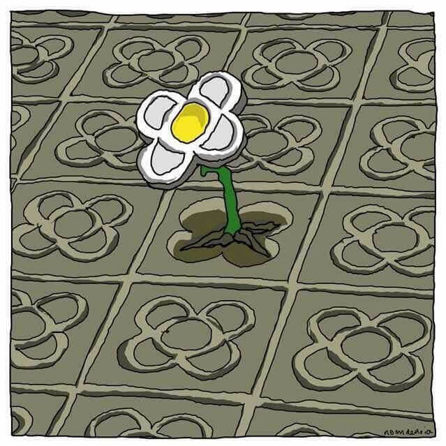 A flower growing through cement.