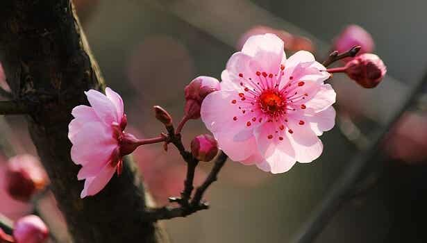 The 5 Keys of Japanese Psychology