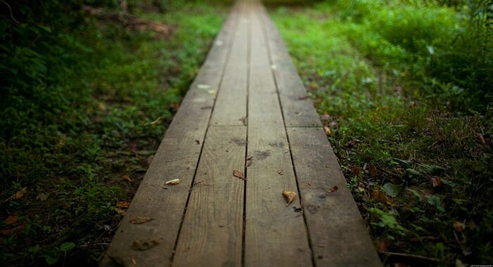 A wooden path in the woods.