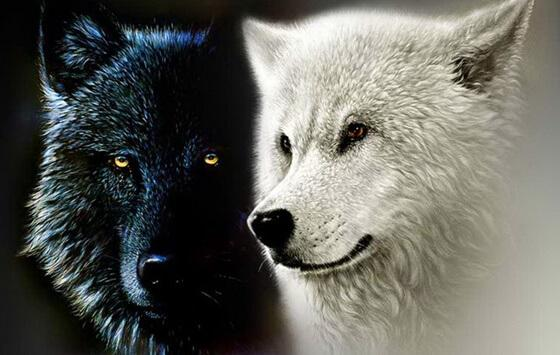 The Cherokee Legend of the Two Wolves, or Our Inner Forces