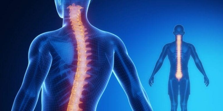 The Spinal Cord: Anatomy and Physiology