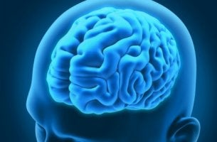 A brain inside of a human head.