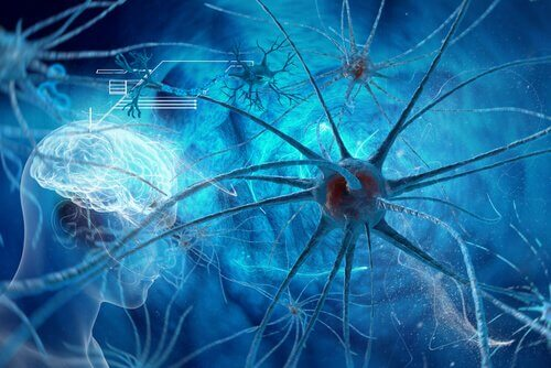 Neurons and the brain.