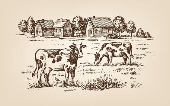 소의 이야기: 일상이 우리를 제약할 때
