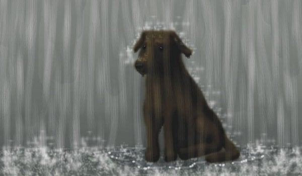 Dog sitting in the rain
