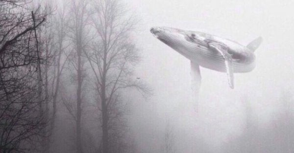 A flying whale in the woods