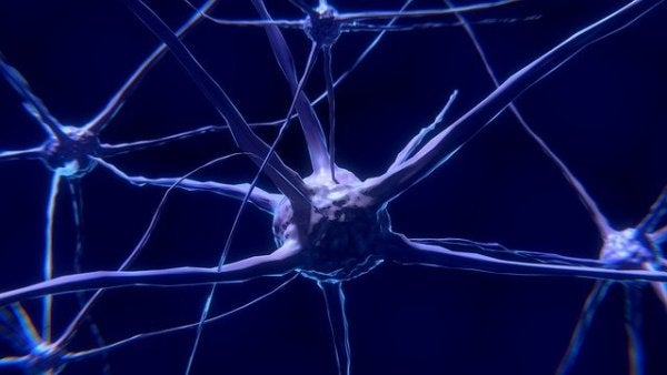 Neurons: What They Are and How They Work