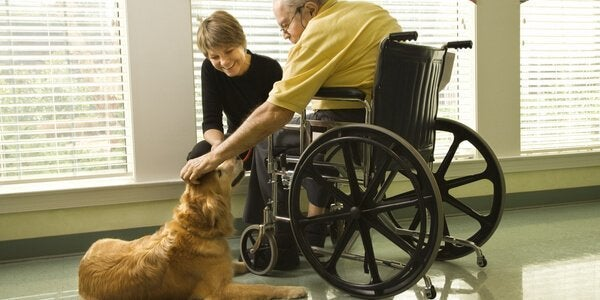 A therapy dog with a man in wheelchair.