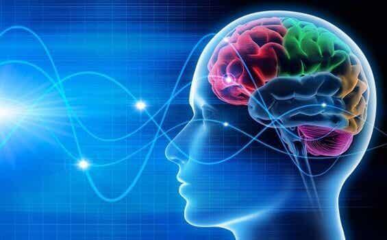 Brain Waves: Delta, Theta, Alpha and Gamma