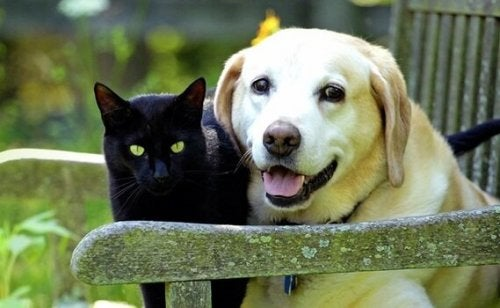 Grieving a Pet: the Loss of a Dear Animal Friend