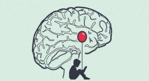 A child's brain.