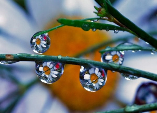 Water drops with flowers in