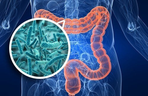 Psychobiotics and intestinal flora