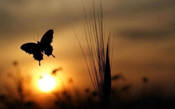 Morning Butterfly Change for the Good