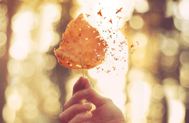 Deal with hurt feelings: leaf