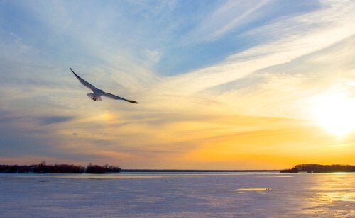 Jonathan Livingston Seagull: Believing in Yourself
