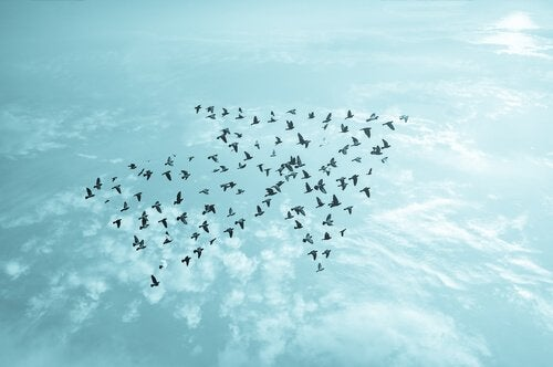 Flock of birds in the shape of an arrow.