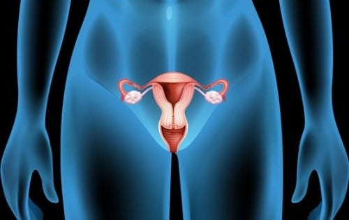 Ovarian Cysts: Symptoms, Causes, and Treatment