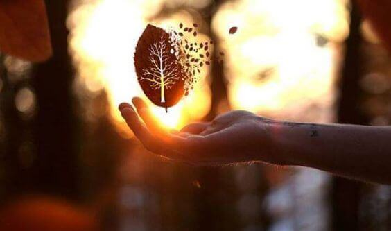 Hand with a leaf
