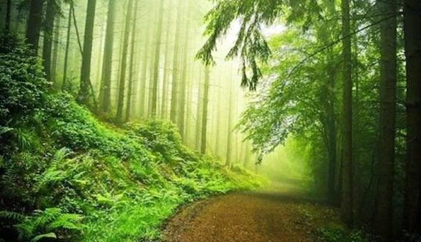 Green leafy wood