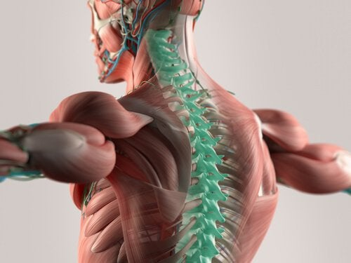 The Cerebrospinal Fluid: The Foundation of the Central Nervous System