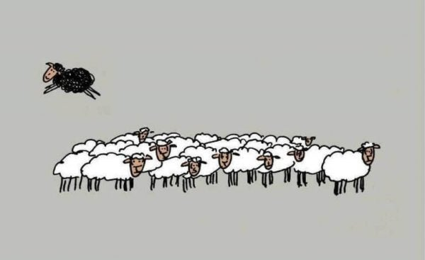 Black sheep jumping over flock of other sheep.