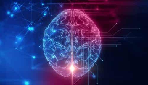 The Orbitofrontal Cortex: The Base of Our Social Behavior