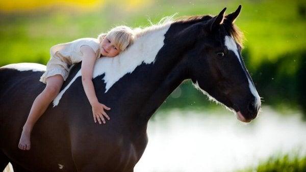terapi med heste, hvor lille pige krammer hest