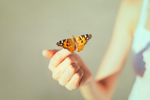 A butterfly signifying the end of creative hopelessness.