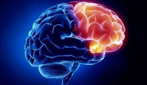The orbitofrontal cortex of the brain.