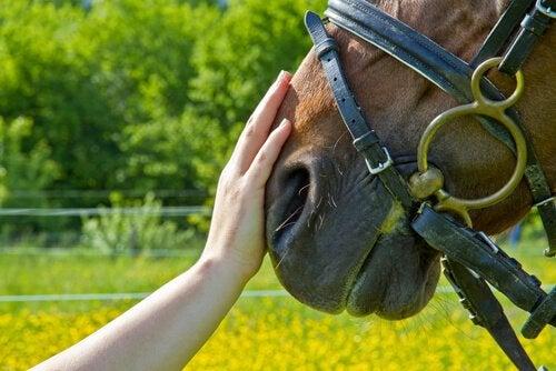 hest der aes på mulen