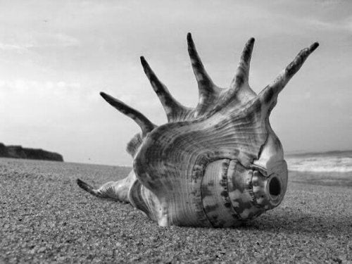 The conch shell is a democratic symbol in The Lord of the Flies.