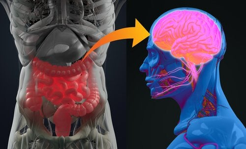 The enteric nervous system and the brain.