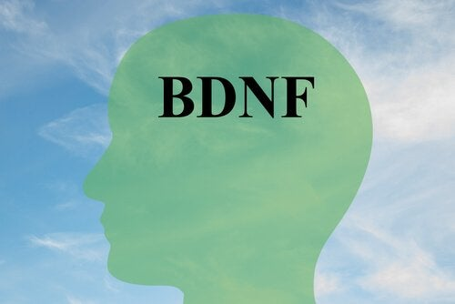 How to Increase BDNF, A Key Protein for Healthy Brain Cells