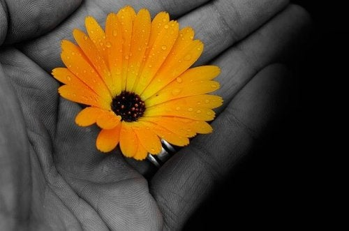 A yellow flower in hand.