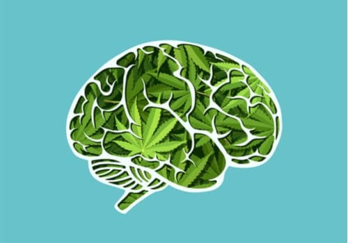 The Long-Term Effects of Cannabis on the Brain