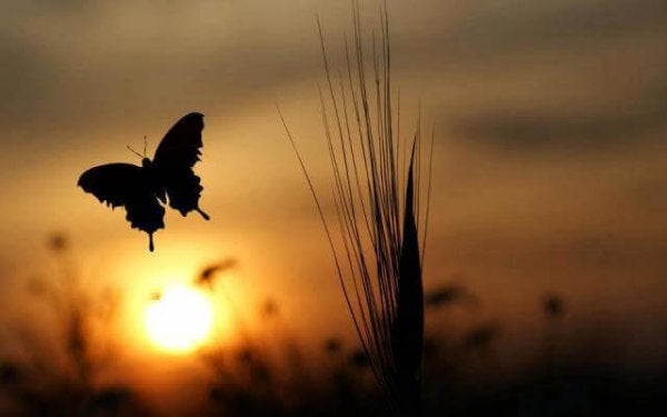 Knowing when to let go is like letting a butterfly flying away.
