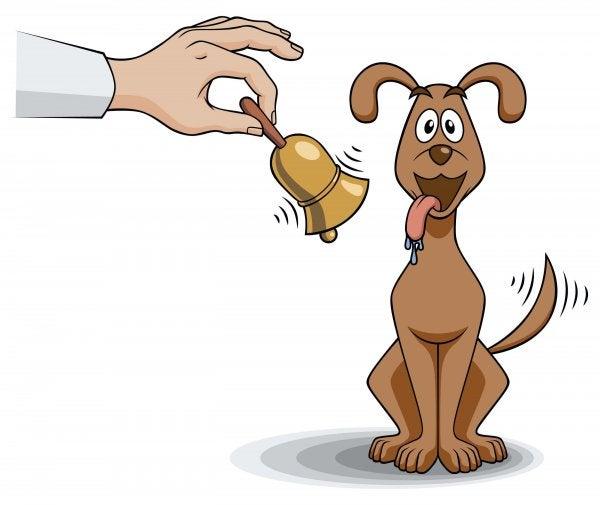 hund der logrer med halen når der ringes med klokke