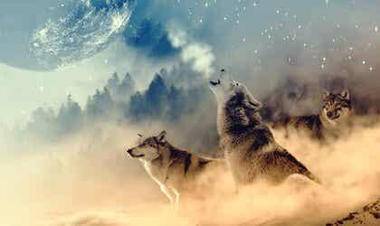 Wolf Medicine According to Native Americans