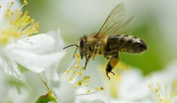Five Lessons We Can Learn from Bees