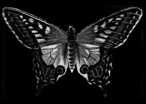 A black butterfly.