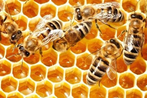 Teamwork is just one of the many lessons we can learn from bees.
