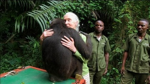 Jane Goodall quotes teach us about more than just chimps.