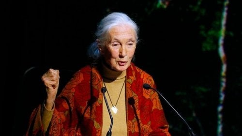 Some Jane Goodall quotes come from her activist conferences.