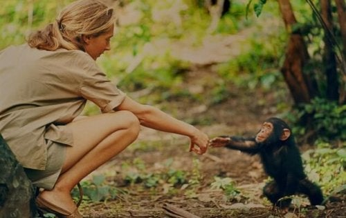 Jane Goodall and a primate.