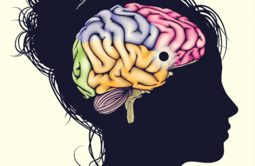 The Nucleus Accumbens: A Learning, Motivation, and Pleasure Center