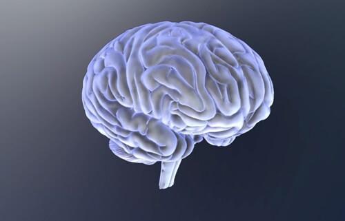 자폐 범주성 장애를 지닌 아동의 두뇌 01